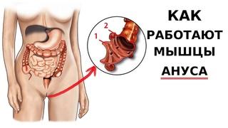 Вагинальные мышцы и анус. Как доставить удовольствие и защититься от вирусов.