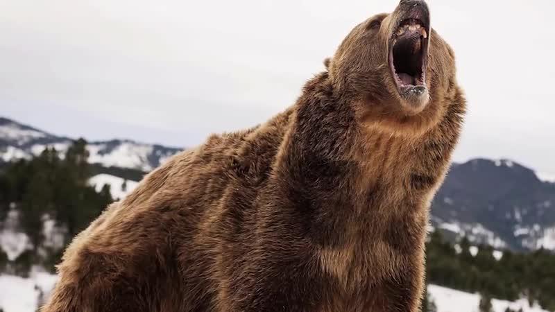 Где побывали медведи