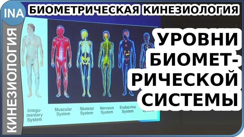 Уровни склеротомной биометрической системы Биометрическая кинезиология