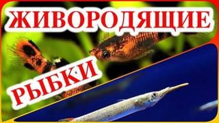 Живородящие аквариумные рыбки виды
