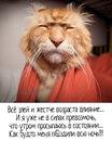 Svetlana Zelenkova фотография #10