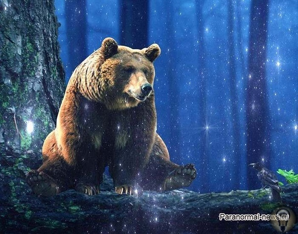 Призрачный медведь Клэпхэмского леса оставляет следы и убивает собак Медведи в историях о паранормальных явлениях, по сравнению со многими другими дикими животными, встречаются очень редко.
