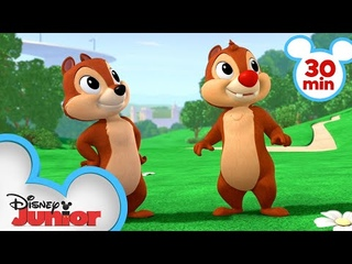 Nutty Tales 30 Minute Compilation! | Chip 'N Dale's Nutty Tales | Disney Junior