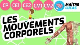 Les mouvements corporels CP CE1 CE2 CM1 CM2 - Le squelette, les os, les articulations et les muscles