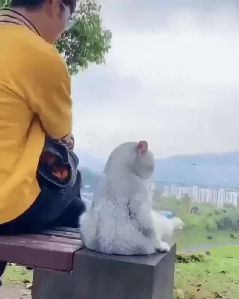 Собака -друг человека ..а кот друг нашей души..