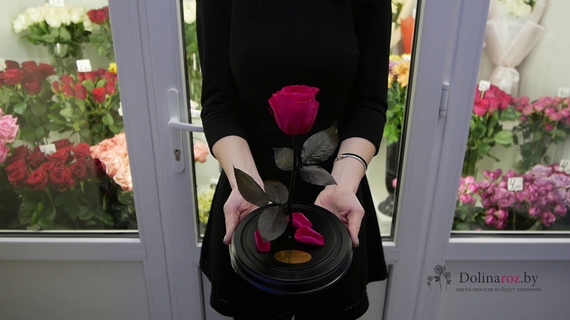 Роза в колбе размер стандарт - Купить в Минске с доставкой