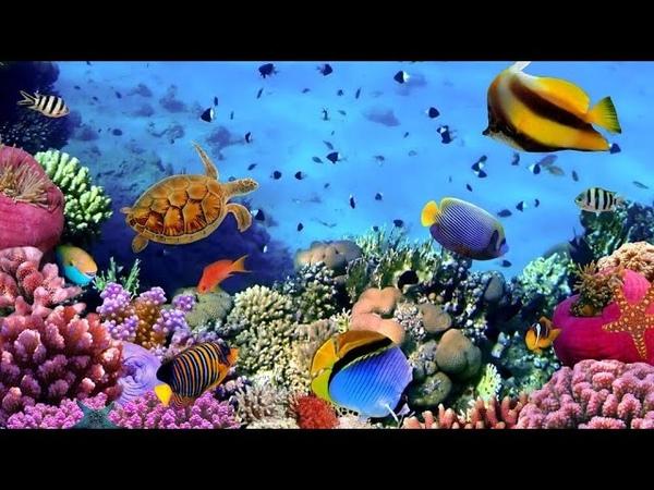 Коралловые рифы жизнь и красота подводного мира Египта