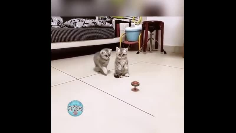 Двое из ларца