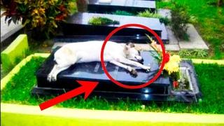 Собака после СМЕРТИ хозяина приходила на КЛАДБИЩЕ 11 лет подряд.Шок история из жизни