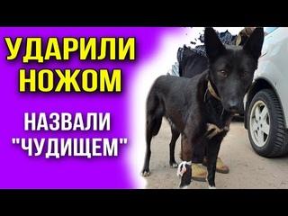 Живодер ударил собаку ножом, а таксист назвал «чудищем» , отказываясь везти в клинику