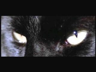The Black Cat Read By Diamanda Galás - AudioBook - Edgar Allan Poe