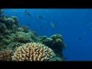 Прекрасный подводный мир Красного моря