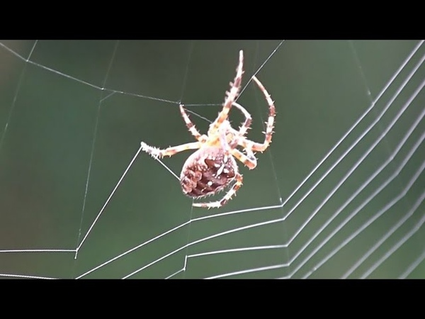 Spider Spinning Its Web Close Up