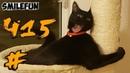 КОТЫ 2021 СМЕШНЫЕ КОШКИ И КОТЫ ПРИКОЛЫ С КОТАМИ И КОШКАМИ 2021 Funny Cats