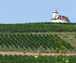 Вино Королей- Король Вин, изображение №1