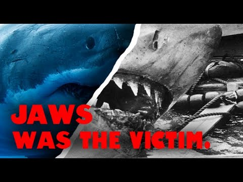 The Shark in Jaws Did Nothing Wrong An Ecological Video Essay