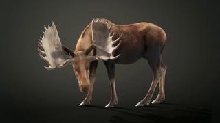 3D model Moose Male EatGrass
