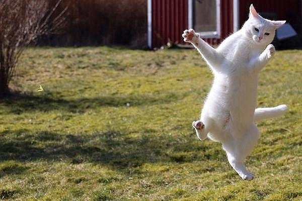 А я иду шaгaю по траве, а я еще подпрыгивать могу!