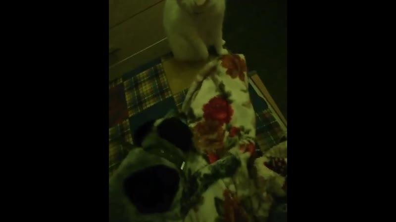 Кобрин Всем приветик от большого семейства Марзиа подружилась с котами а вот Гайка не очень рада нашей новенькой но уже нач