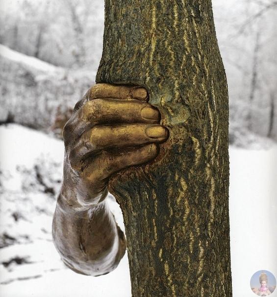 Рука сжимающая дерево Итальянский скульптор установил руку на одном из деревьев в скульптурном центре Nasher Sculpture Center (Даллас, США) в 1968 году. Надо сказать, что 52 года спустя это все