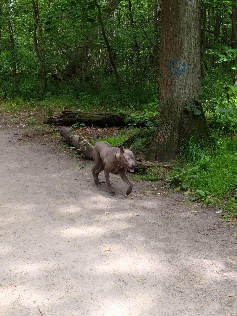 С 10 утра и до часу этот зверь бегает от входа в лес до карьера.