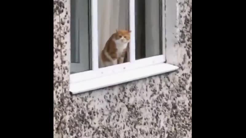 Кот суицидник и переговорщик