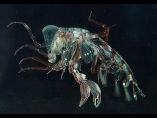 Unexpectedly interesting 😱, Alien Monster Larvae #Shorts