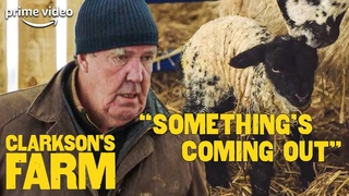 Jeremy Clarkson is Disgusted and Amazed at Sheep Birth   Clarkson's Farm   The Grand Tour