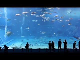 Японская песня на фоне океанариума