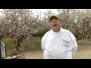 Arı ölümlerinin sırrı belgesel YouTube