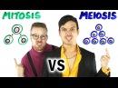 Mitosis vs Meiosis RAP BATTLE