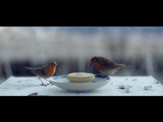 iAdsReview- Waitrose - Возвращение домои на Рождество - Трогательный милый новогодний ролик - настроение - видео 2017