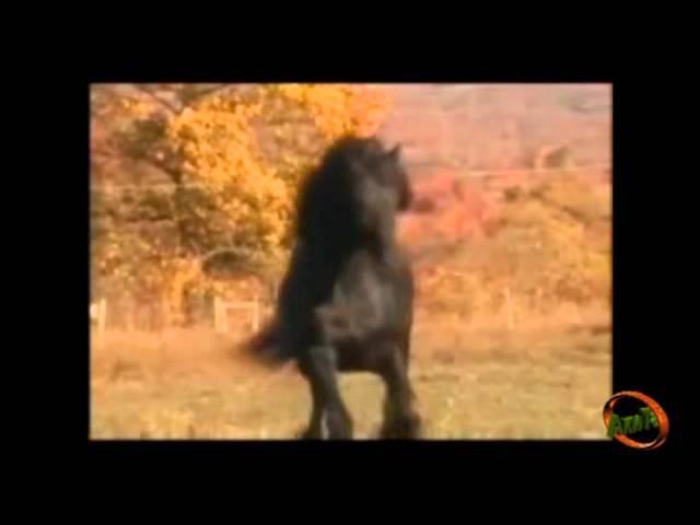 Далеко далеко ускакала в поле молодая лошадь