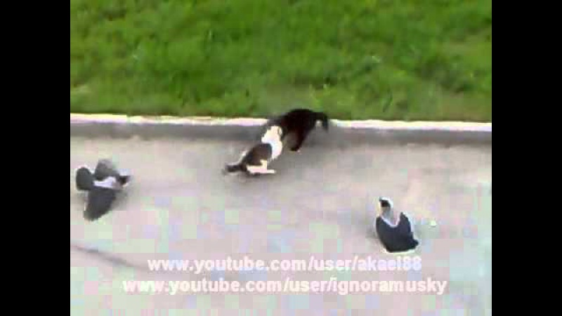 Epic Cat Fight cat's horror Crows vs Cat vs Cat Street Fight