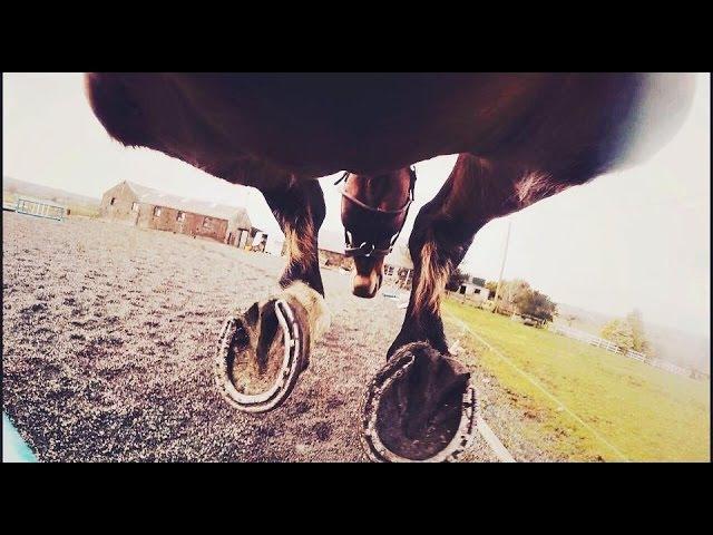 GoProClub horse girth