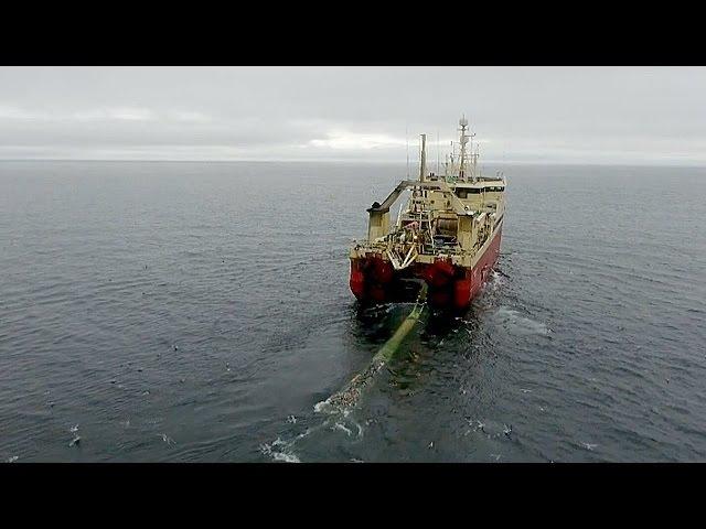 Экосистема Арктики под угрозой из за чрезмерного рыболовства новости