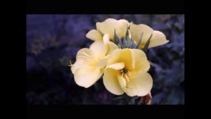 як розпускаються квіти