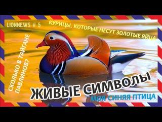 Львиная новость №5 Птичий двор