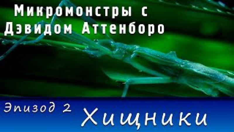 Микромонстры с Дэвидом Аттенборо. Эпизод 2 - Хищники (2013)   HD 720p