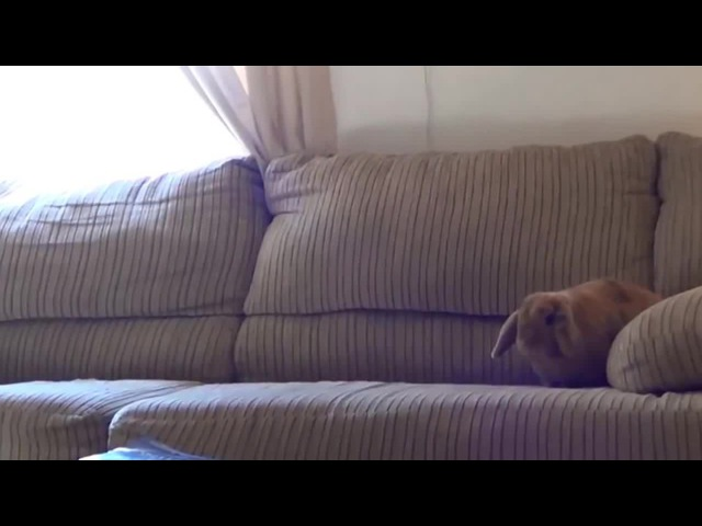 На диван гифка