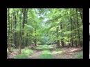 Sokolov Haydn Sonata in E minor Bisdorf 12th May 2002