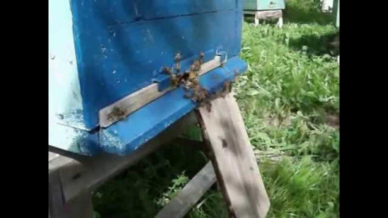 Пчеловодство Трутовка задачка и решение