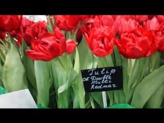 Выставка тюльпанов в Ботаническом саду 2017.