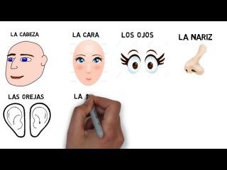 Испанский язык.Учим слова. Части тела. Начальный уровень.