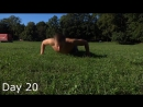 TOP 5 Best Push Ups Challenge For 30 Days -- Amazing Transformation_00