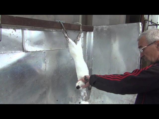 Обучающее видео: Забой кроликов в домашних условиях за 1,5 минуты. ЛПХ Сахон