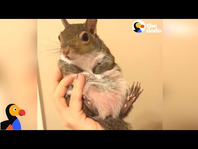 Squirrel Saved From Hurricane Is SPOILED by Her Mom The Dodo