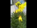 Экзотические цветы.