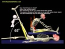 The Proper Technique for the Seated Hamstring Stretch: 3D Animation of Muscles in Motion