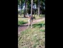Волчара на прогулке